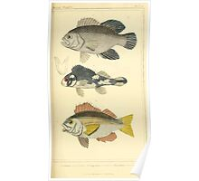 The Animal Kingdom by Georges Cuvier, PA Latreille, and Henry McMurtrie 1834  095 - Pisces Fish Poster