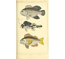 The Animal Kingdom by Georges Cuvier, PA Latreille, and Henry McMurtrie 1834  095 - Pisces Fish Photographic Print