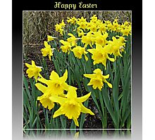 Easter Daffodils - Greeting Card Photographic Print