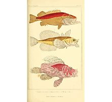 The Animal Kingdom by Georges Cuvier, PA Latreille, and Henry McMurtrie 1834  086 - Pisces Fish Photographic Print