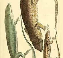 The Animal Kingdom by Georges Cuvier, PA Latreille, and Henry McMurtrie 1834  009 - Reptilia Reptiles by wetdryvac