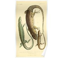 The Animal Kingdom by Georges Cuvier, PA Latreille, and Henry McMurtrie 1834  009 - Reptilia Reptiles Poster