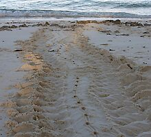 Turtle Tracks In The Sand by Gina Ruttle  (Whalegeek)