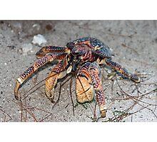 Aldabra Hermit Crab Photographic Print