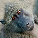 Wildlife of Africa by Susan van Zyl