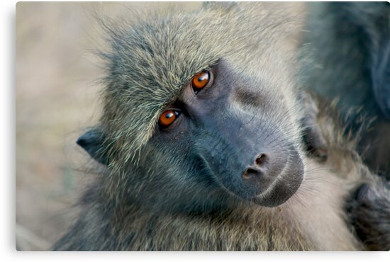 A face only a mother can love by Susan van Zyl
