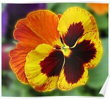 Amber and Gold Pansy Close-up Poster