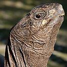 Reptilian profile by Gina Ruttle  (Whalegeek)