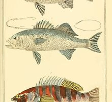 The Animal Kingdom by Georges Cuvier, PA Latreille, and Henry McMurtrie 1834  051 - Pisces Fish by wetdryvac