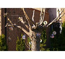 Suburbia.....in the 21st Century....A Disk Tree.... Photographic Print