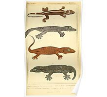 The Animal Kingdom by Georges Cuvier, PA Latreille, and Henry McMurtrie 1834  014 - Reptilia Reptiles Poster