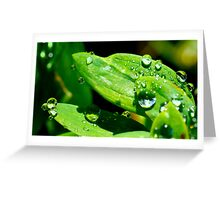 Nature's own Magnifying Glass Greeting Card