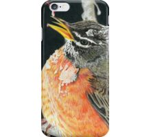 Icy Robin iPhone Case/Skin