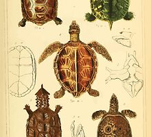 The Animal Kingdom by Georges Cuvier, PA Latreille, and Henry McMurtrie 1834  002 - Reptilia Reptiles by wetdryvac