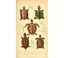 The Animal Kingdom by Georges Cuvier, PA Latreille, and Henry McMurtrie 1834  002 - Reptilia Reptiles Photographic Print