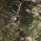 Scary Spider by Susan van Zyl