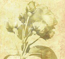 Sam's Rose  by jesika
