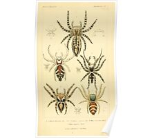 The Animal Kingdom by Georges Cuvier, PA Latreille, and Henry McMurtrie 1834  399 - Arachnides Arachnids Poster