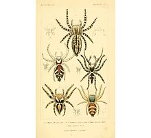 The Animal Kingdom by Georges Cuvier, PA Latreille, and Henry McMurtrie 1834  399 - Arachnides Arachnids Photographic Print