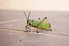 Locust - Knocking at the Door  by RatManDude