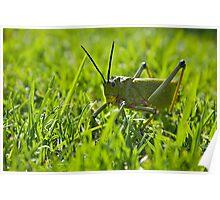 Locust - Head on Poster