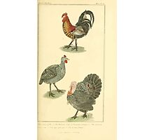 The Animal Kingdom by Georges Cuvier, PA Latreille, and Henry McMurtrie 1834 601 - Aves, Avians, Birds Photographic Print