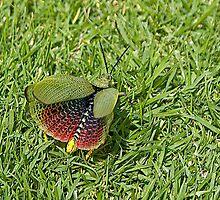 Locust Tacking Flight by RatManDude