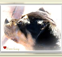 Love from Lucy by Terry Temple