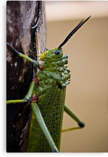 Locust on Palm Tree Bark by RatManDude