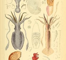 The Animal Kingdom by Georges Cuvier, PA Latreille, and Henry McMurtrie 1834  211 - Mollusca Mollusks by wetdryvac