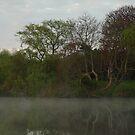 Morning Mist by Barbara Gerstner