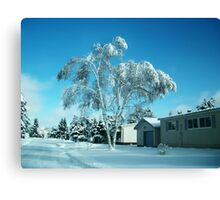BEAUTIFUL WINTER SCENE...WITH BIRCH COVERED TREE PICTURES - PILLOWS - TOTE BAGS ECT Canvas Print