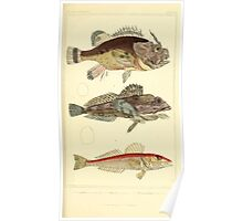 The Animal Kingdom by Georges Cuvier, PA Latreille, and Henry McMurtrie 1834  078 - Pisces Fish Poster