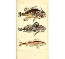 The Animal Kingdom by Georges Cuvier, PA Latreille, and Henry McMurtrie 1834  078 - Pisces Fish Photographic Print