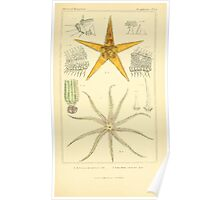 The Animal Kingdom by Georges Cuvier, PA Latreille, and Henry McMurtrie 1834 601 - Zoophytes, Plant-Like Poster