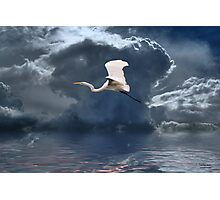 Egret Flying Color Photographic Print