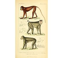 The Animal Kingdom by Georges Cuvier, PA Latreille, and Henry McMurtrie 1834 569 - Mammalia Mammals Photographic Print