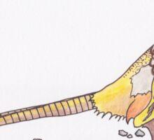 Pheasant in Caithness Sticker