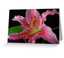 Acapulco Lily III Greeting Card