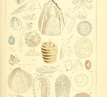 The Animal Kingdom by Georges Cuvier, PA Latreille, and Henry McMurtrie 1834 601 - Mollusca, Mollusks by wetdryvac
