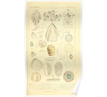 The Animal Kingdom by Georges Cuvier, PA Latreille, and Henry McMurtrie 1834 601 - Mollusca, Mollusks Poster