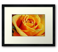 Flame Colored Rose Framed Print