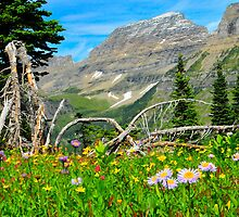 wild flowers in Glacier National Park by troutisme