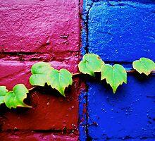 les petits, en rose et bleu, uni par vigne by David Warren
