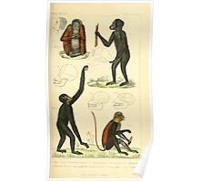 The Animal Kingdom by Georges Cuvier, PA Latreille, and Henry McMurtrie 1834 565 - Mammalia Mammals Poster