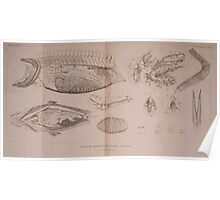 The Animal Kingdom by Georges Cuvier, PA Latreille, and Henry McMurtrie 1834  210 - Pisces Fish Poster