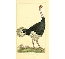 The Animal Kingdom by Georges Cuvier, PA Latreille, and Henry McMurtrie 1834 601 - Avies, Birds Photographic Print