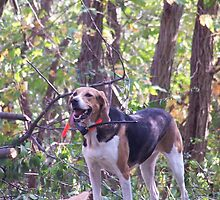 Special Foxhound