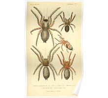 The Animal Kingdom by Georges Cuvier, PA Latreille, and Henry McMurtrie 1834  363 - Arachnides Arachnids Poster
