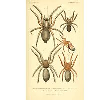 The Animal Kingdom by Georges Cuvier, PA Latreille, and Henry McMurtrie 1834  363 - Arachnides Arachnids Photographic Print